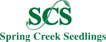 Spring_Creek_Seedling_logo